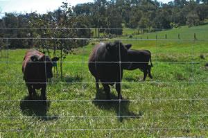 Livestock fencing options
