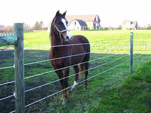 Hotcote 174 Fence Wire White 1320 Ft