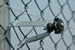 Chain-link Insulator