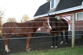 Horse Fence Comparison