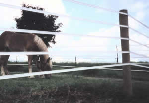 "1"" Ponyrail 14 Gauge"